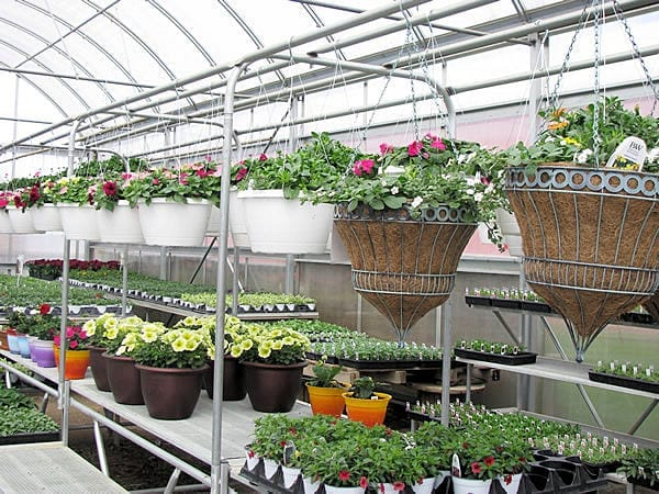 We have the flowering plants you need!