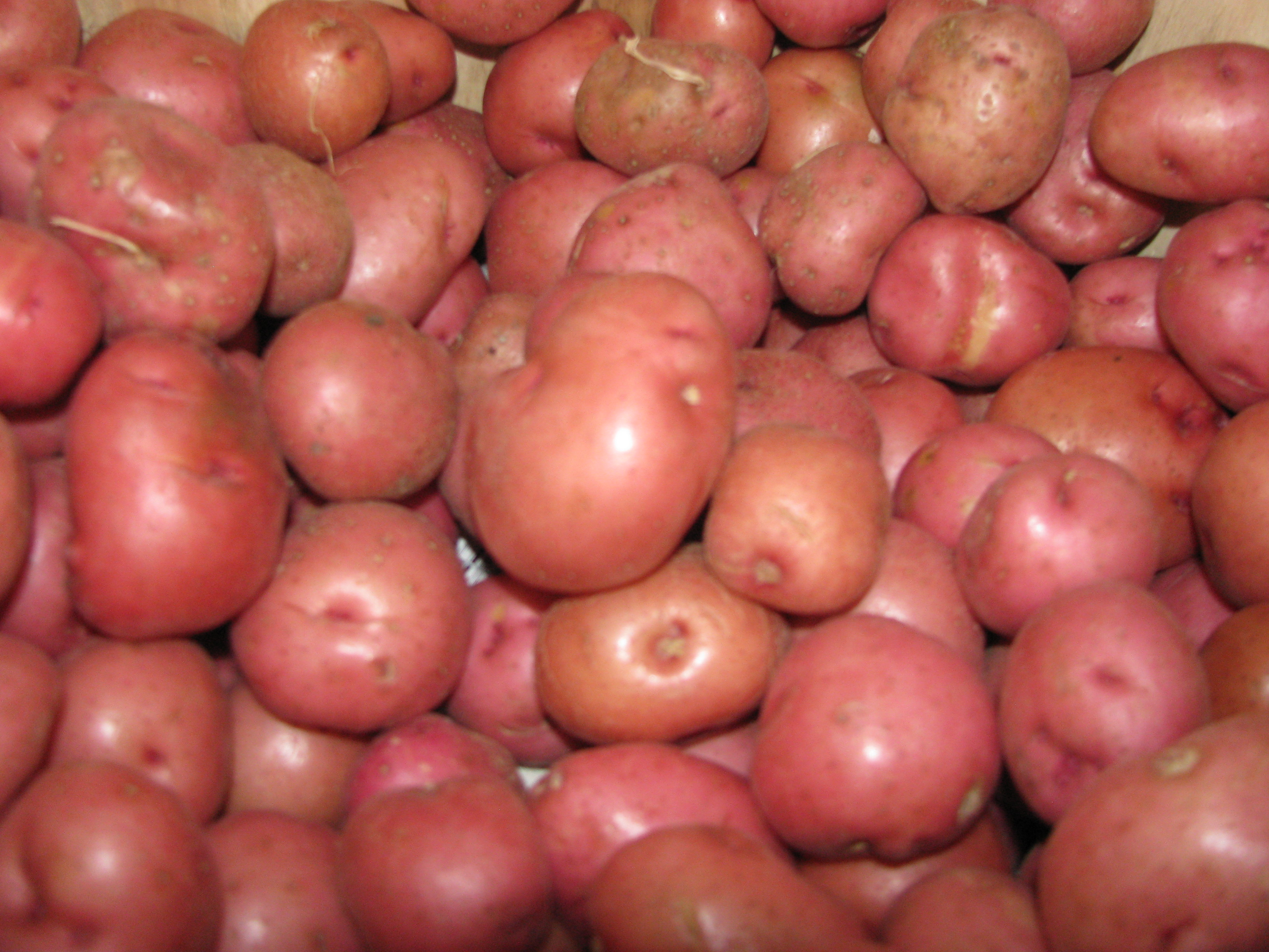 B Potatoes