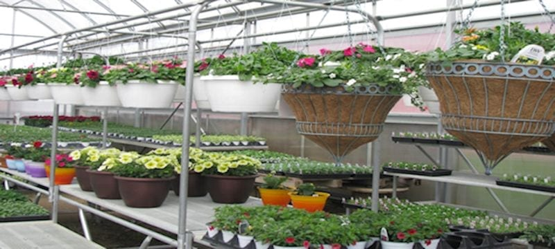 Inside Greenhouse/hanging and pots