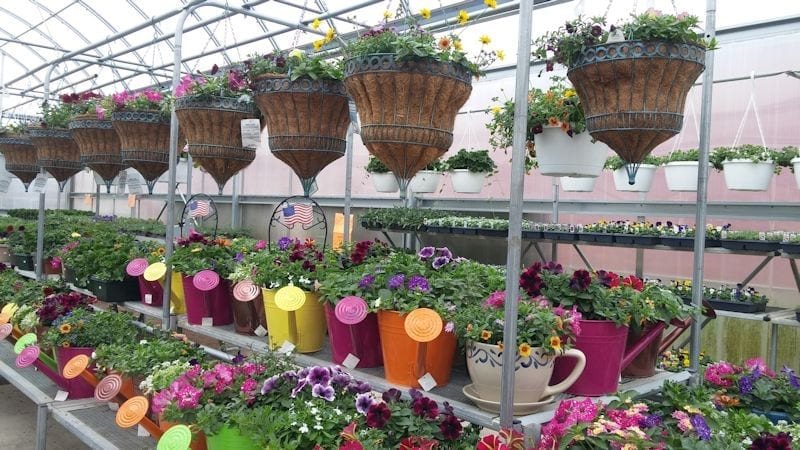 800 Hanging Baskets and watering cans